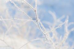 белая зима стоковое изображение rf