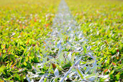 Белая линия нашивки на поле зеленой травы Стоковая Фотография RF
