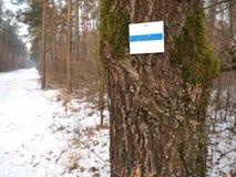 Белая и голубая отметка пути на сосне в зиме forrest Стоковое фото RF