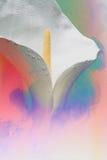 Белая лилия в голубом облаке Стоковые Фотографии RF