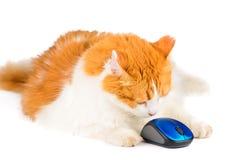 Белая и красная мышь кота и компьютера Стоковое фото RF