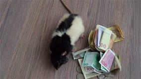 Белая и черная крыса идет вокруг монеток и банкнот видеоматериал