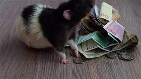 Белая и черная крыса идет вокруг монеток и банкнот сток-видео