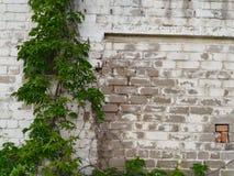 Белая кирпичная стена обрамленный зеленый горизонтально завод фото Стоковые Изображения