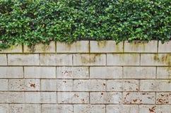 Белая кирпичная стена с зелеными листьями Стоковая Фотография