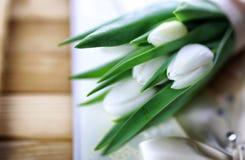 Белая книга шнурка тюльпана Стоковые Изображения