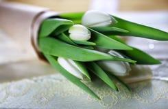 Белая книга шнурка тюльпана Стоковая Фотография RF