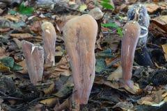 белая коричневая группа в составе земля грибов Стоковая Фотография RF