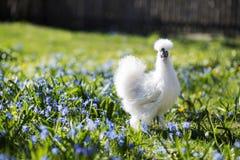 Белая курица на дворе цветка Стоковая Фотография