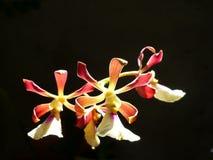 Белая малая орхидея стоковое изображение