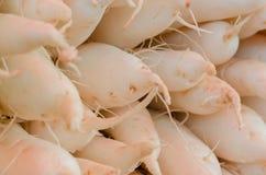 Белая морковь в рынке свежих продуктов Стоковая Фотография
