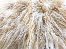 Белая органическая текстура ватки Старое пальто Белая предпосылка ковра стоковая фотография