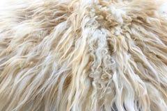 Белая органическая текстура ватки Старое пальто Белая предпосылка ковра стоковая фотография rf