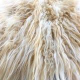 Белая органическая текстура ватки Старое пальто Белая предпосылка ковра стоковое фото