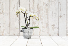 Белая орхидея в баке металла, на белых деревянных планках Стоковое фото RF
