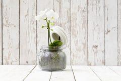 Белая орхидея в стекловарном горшке, на белых деревянных планках Стоковые Изображения