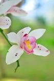 Белая орхидея Стоковое фото RF