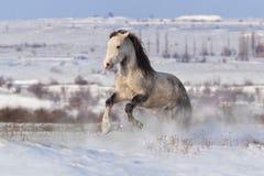 Белая лошадь в снеге Стоковое фото RF