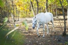 Белая лошадь идет среди деревьев Стоковое Изображение