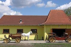 Белая лошадь и старый экипаж Стоковое Изображение RF