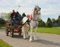 Белая лошадь и телега Стоковые Фотографии RF