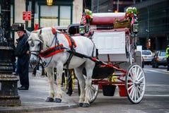 Белая лошадь и экипаж Стоковые Фотографии RF