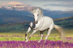 Белая лошадь на цветке стоковое изображение rf