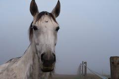 Белая лошадь стоя на paddock Стоковая Фотография