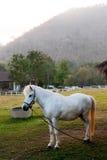 Белая лошадь Стоковые Фото