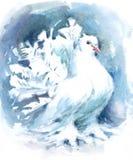 Белая покрашенная рука иллюстрации акварели птицы голубя Fantail Стоковое Изображение