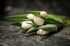 Белая предпосылка зеленого цвета подарочной коробки тюльпана Стоковая Фотография