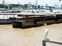Белая птица видит, что река от праздника путешествует Стоковые Фото