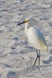 Белая птица на пляже Стоковые Фото