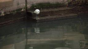 Белая птица сидя водой в Венеции видеоматериал
