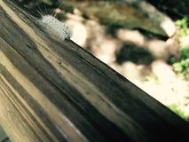 Белая пушистая гусеница Стоковое Фото