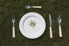 Белая плита на траве Стоковые Фото