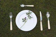 Белая плита на траве Стоковые Изображения RF