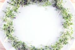 Белая плита с рамкой салата кресса на деревянной предпосылке К Стоковые Фото