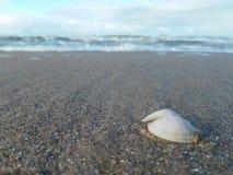 Белая раковина в пляже Стоковое Фото