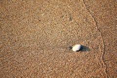 Белая раковина на пляже песка Стоковая Фотография RF