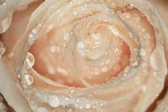 Белая роза лепестков с падениями воды Стоковые Фото