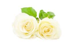 Белая роза на белизне Стоковое фото RF