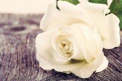 Белая роза на винтажной деревянной предпосылке Стоковое Изображение