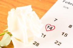 белая роза на календаре с датой 14-ое февраля Valentin Стоковое Изображение RF