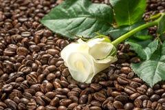 Белая роза на кофе, комплекте обработки курорта стоковая фотография rf