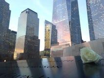 Белая роза на крае южного бассейна 9/11 мемориалов Стоковая Фотография