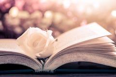 Белая роза на открытой книге на предпосылке bokeh Стоковое Фото