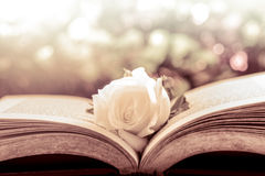 Белая роза на открытой книге на предпосылке bokeh Стоковые Фото
