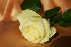 Белая роза, символ очищенности стоковое изображение rf