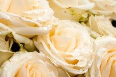 Белая роза с падениями Стоковое фото RF
